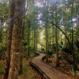 One of many walking trails through the Barataria Preserve at JELA