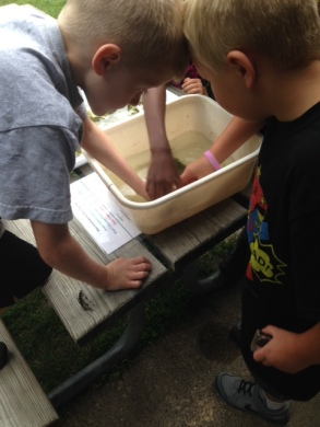 Several kids looking for macro invertebrates in the small buckets at each table.