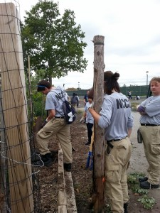 Volunteers putting in fence posts at the urban farm