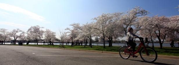Biker on Hains Point