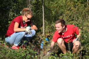Volunteers plant shrubs on the hillside.