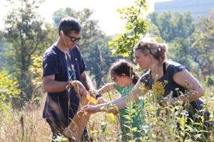 A family of volunteers collects native prairie seeds to be used in prairie nurseries.