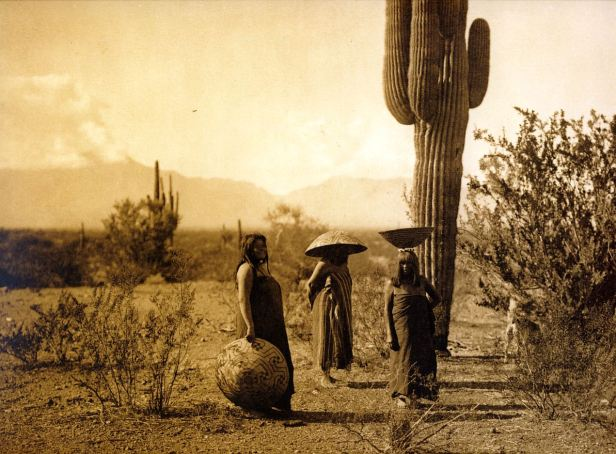 208835296-Vofa_26_The_Maricopa_rely_on_cactus_fruit_in_their_diet._These_women_are_shown_gathering_Saguaro_fruit_1907_Edward_S._Curtis_sqs