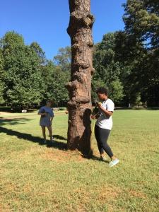 Measuring tree circumfrence