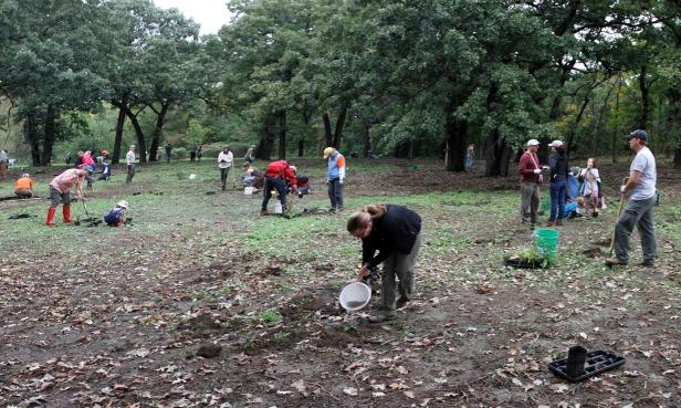 planting_panorama11