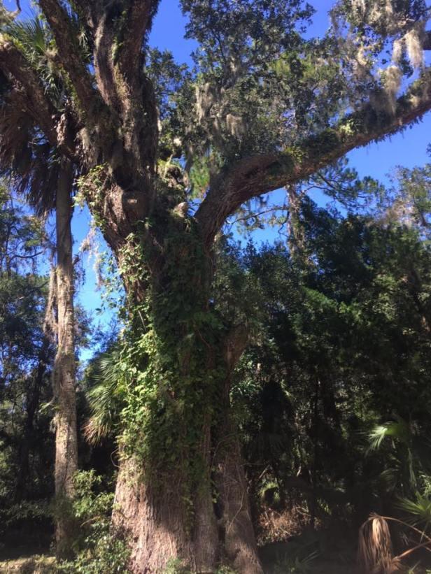 wit-tree-hur-mat
